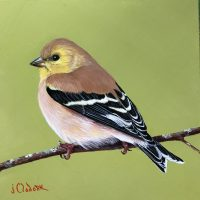 a-Winter Goldfinch 1-18