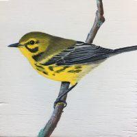 b-Prairie Warbler 1-18